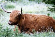 属牛的婚配秘笈(图文)