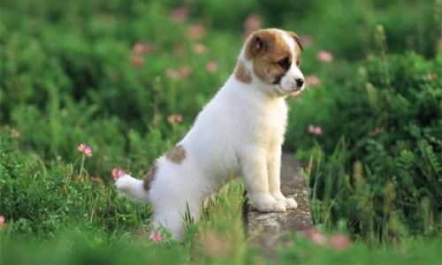 晚上狗叫有什么预兆,什么人不适合养狗-轻博客