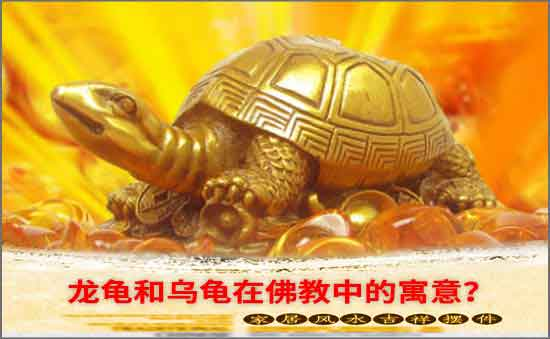 龙龟和乌龟在佛教中的寓意-轻博客