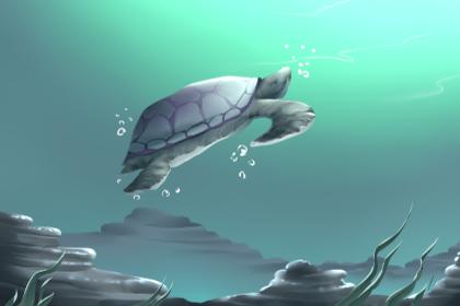梦见自己捉了一只乌龟 是什么征兆(图文)-轻博客