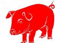 看生肖属猪的人2020年运势