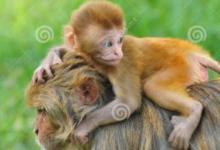 2020年属猴人运势及运程分析,属猴人2020年每月运势