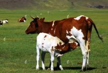 2020年属牛人运势及运程分析,属牛人2020年每月运势