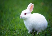 属兔的人2020年运程,2020年属兔人的全年运势