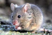 2020年属鼠人运势及运程分析,属鼠人2020年每月运势