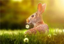 87年属兔命中三大劫是什么,哪一年有劫