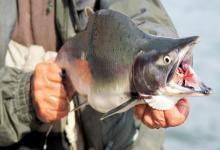 梦见自己看见别人杀鱼是什么意思
