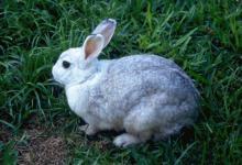 1963年属兔人2020年运势男性 63兔男今年每月运势
