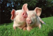 1971年属猪人2020年运势女性 71猪女今年每月运势