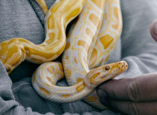 女性梦到好多蛇是什么意思 梦见好多蛇预兆什么