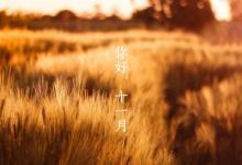 2019年十一月初三感恩节丑时出生喜用神是什么?(图文)