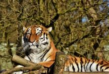 86年属虎的34岁需注意什么,需小心防范小人