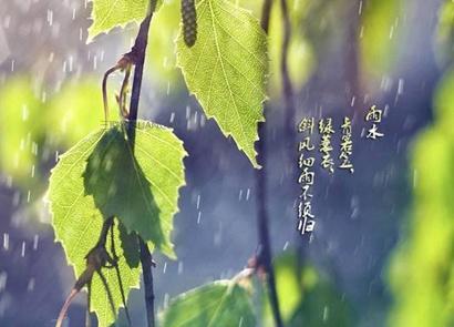 属龙雨水节气出生的人命运如何 属龙雨水出生命格解析(图文)
