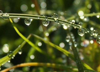 2020年雨水后一天适合安葬逝者吗,关于雨水节气俗语推荐!(图文)
