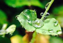 雨水节气出生的属猪人好不好 属猪雨水出生命运如何?(图文)
