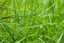2020年雨水后一天(2月20日)订婚吉利吗,还有几天雨水?(图文)