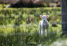 白羊座喜欢乖乖女吗,白羊喜欢什么特质