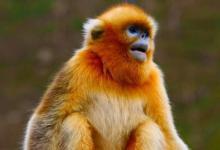 2004年属猴的人2021年运势 18岁佩戴什么吉祥物好