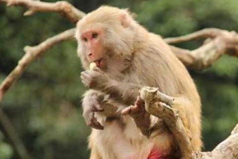 2004年属猴人2021年运势男命 04年出生17岁生肖猴男2021年运程详解