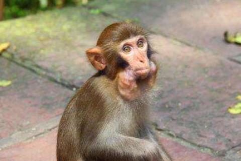 属猴的人腊月间的运气怎么样