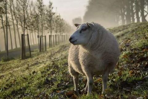 2020年属羊生肖害太岁,害太岁是什么意思