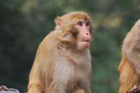 2016年属猴人2021年运势男命 16年出生5岁生肖猴男2021年运程详解