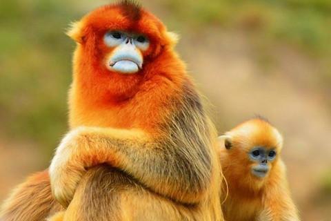 属猴2021年运势及运程 2021年属猴人的全年运势