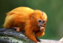 1992年属猴的人2021年运程 今年多大了几岁?