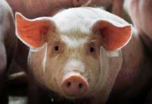 2019年属猪人2021年运势男命 19年出生2岁生肖猪男2021年运程详解