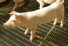 1995年属猪人2021年运势男命 95年出生26岁生肖猪男2021年运程详解
