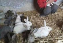 2011年属兔人2021年运势男命 11年出生10岁生肖羊男2021年运程详解