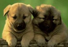 不同年份出生的属狗人今年多少岁?2020年属狗人多大