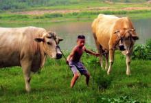 2021年倒霉又破财的生肖?牛年哪些生肖会破财
