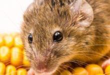1996年属鼠人本命年多少岁,2020年今年运势好吗