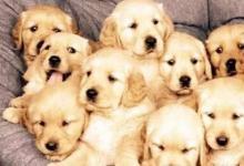 属狗人2021年全年运势及运程详解 2021年属狗的运势和财运如何
