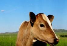 2021年出生的属牛的人命好吗?牛年属牛几月份出生最好命