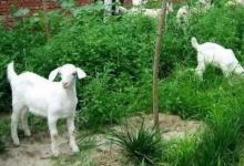 2015年属羊人2021年运势男命 15年出生6岁生肖羊男2021年运程详解