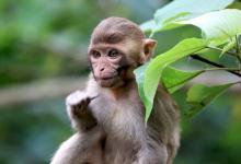 1980年属猴的人2021年运程 今年多大了几岁?
