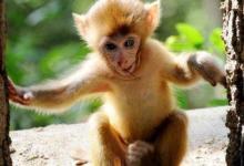 1992年属猴人2021年运势男命 92年出生29岁生肖猴男2021年运程详解