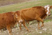 属牛人2021年运势运程 2021年属牛人的全年每月运势及完整版