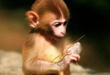 属猴人2021年运势运程 2021年属猴人的全年每月运势及完整版