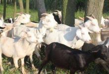 2003年属羊人2021年运势男命 03年出生18岁生肖羊男2021年运程详解