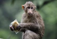 麦玲玲属猴人2021年运势运程 2021年生肖猴运程