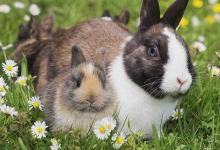 1999年属兔人2021年运势男命 99年出生22岁生肖兔男2021年运程详解
