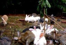 1987年属兔人2021年运势男命 87年出生34岁生肖87男2021年运程详解