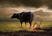 属牛男2021年全年运势及运程,属牛人2021年佩戴什么饰品最旺
