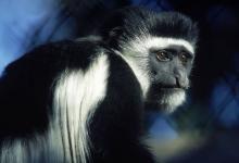 属猴女2021年运势如何,2021年属猴人的2021年全年运势女性