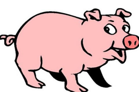 生肖猪和生肖龙的合财吗?
