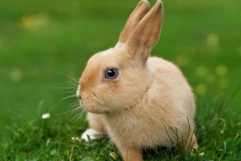 生肖兔和生肖蛇的合财吗?