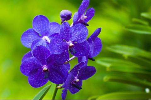 家居风水中人们的家里千万不能养的6种花